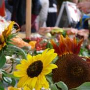 Smak jesieni – targi staroci